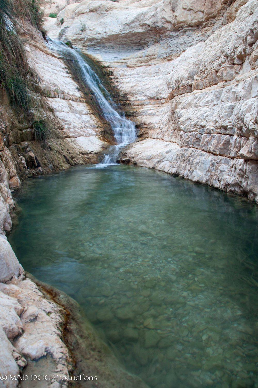 Ein Gedi, Masada, Dead Sea-5664