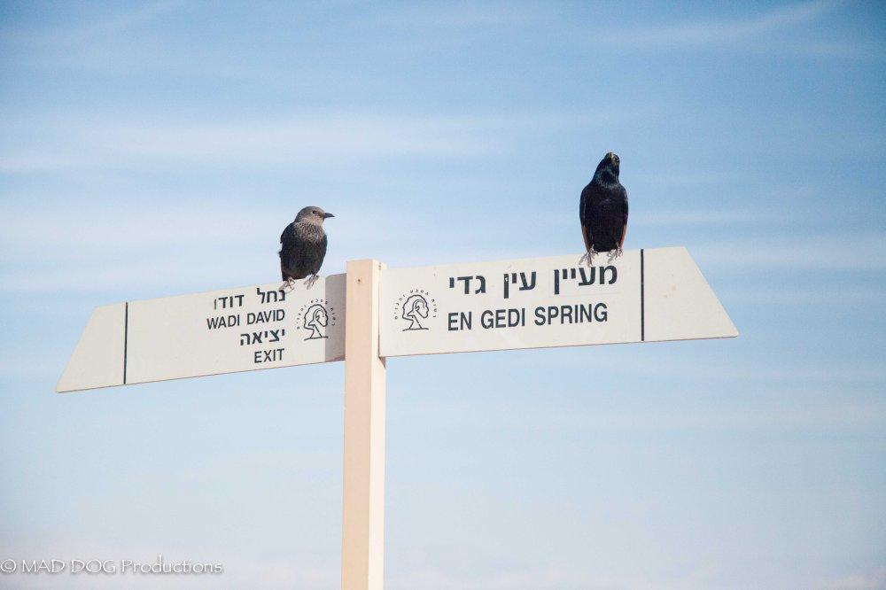 Ein Gedi, Masada, Dead Sea-5698