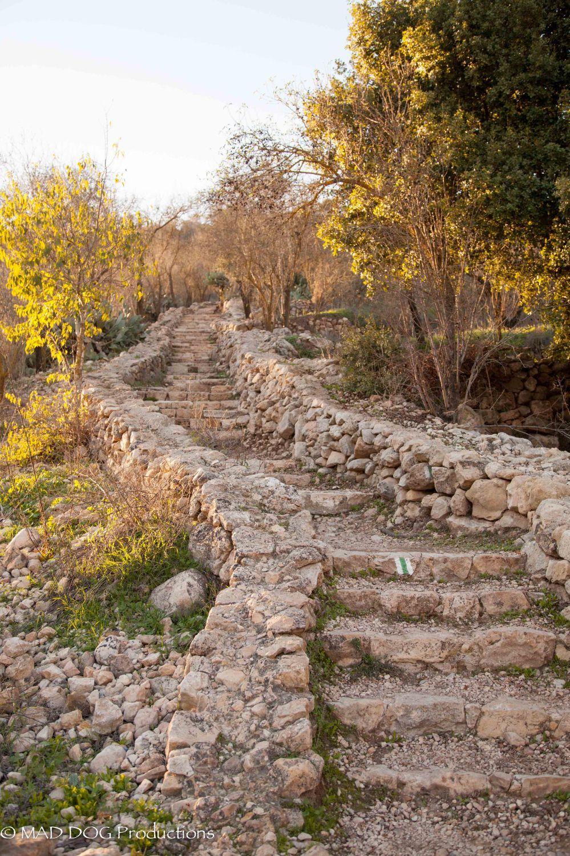 Jerusalem Hike-5989