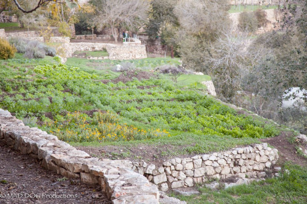 Jerusalem Hike-5993