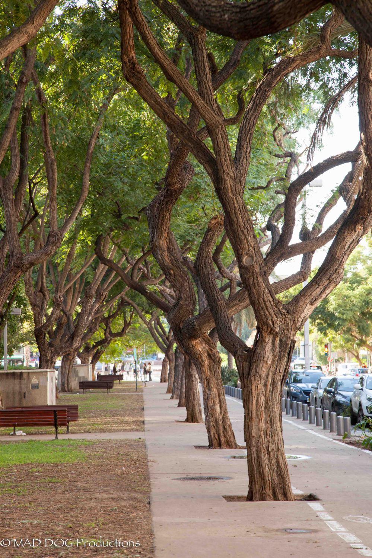 Tel Aviv Museum of Art Weekend-5907