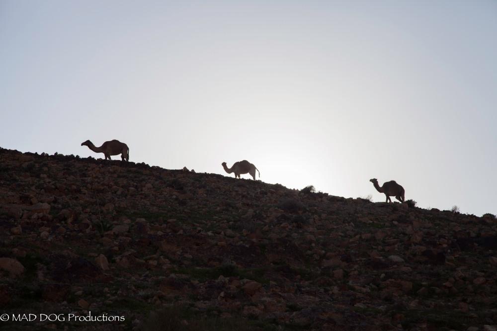 masada, kfar-9829