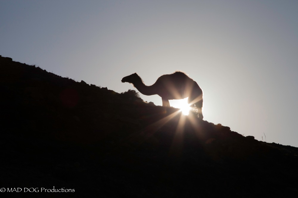 masada, kfar-9859.jpg