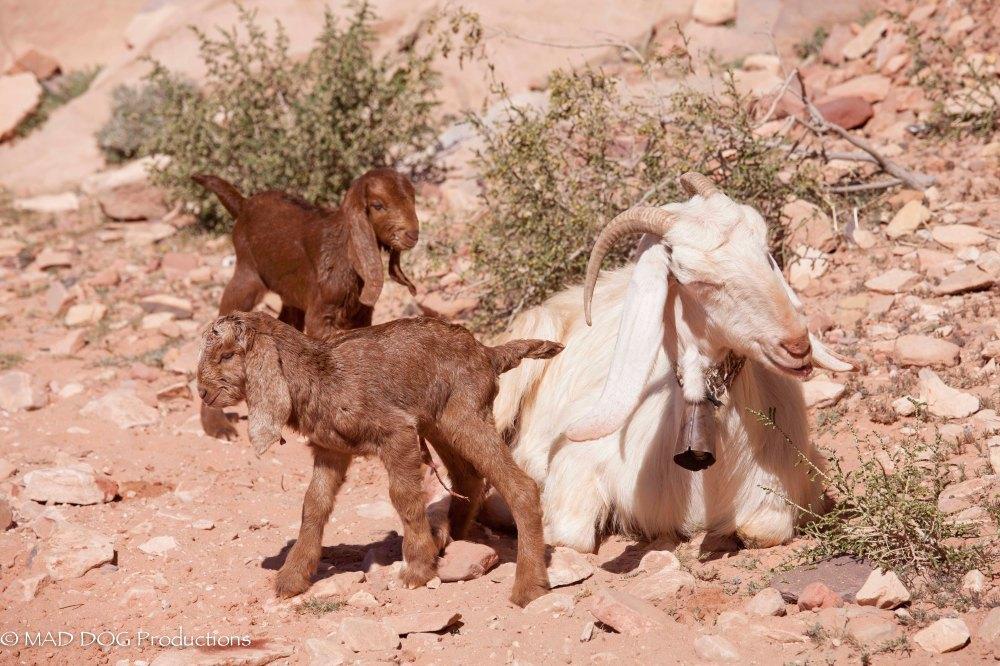 petra wadi musa-0356