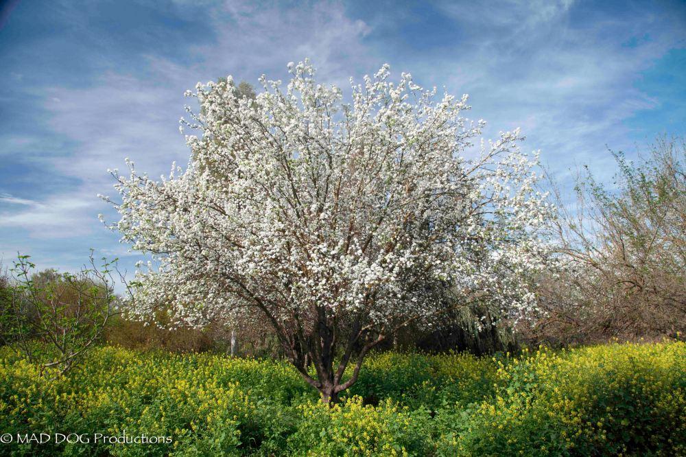 Akko, Sea of Galilee-1386