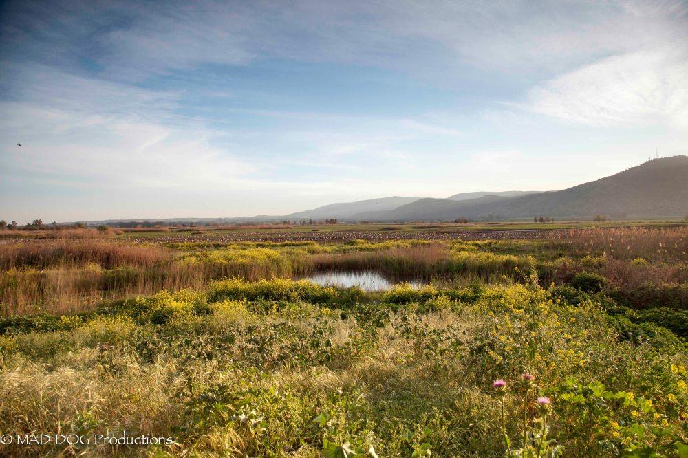 Akko, Sea of Galilee-1472