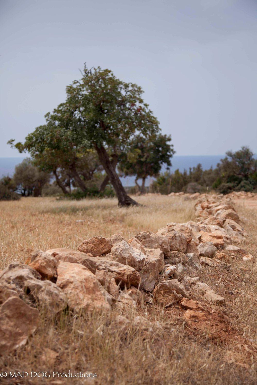 Cyprus 1-3697