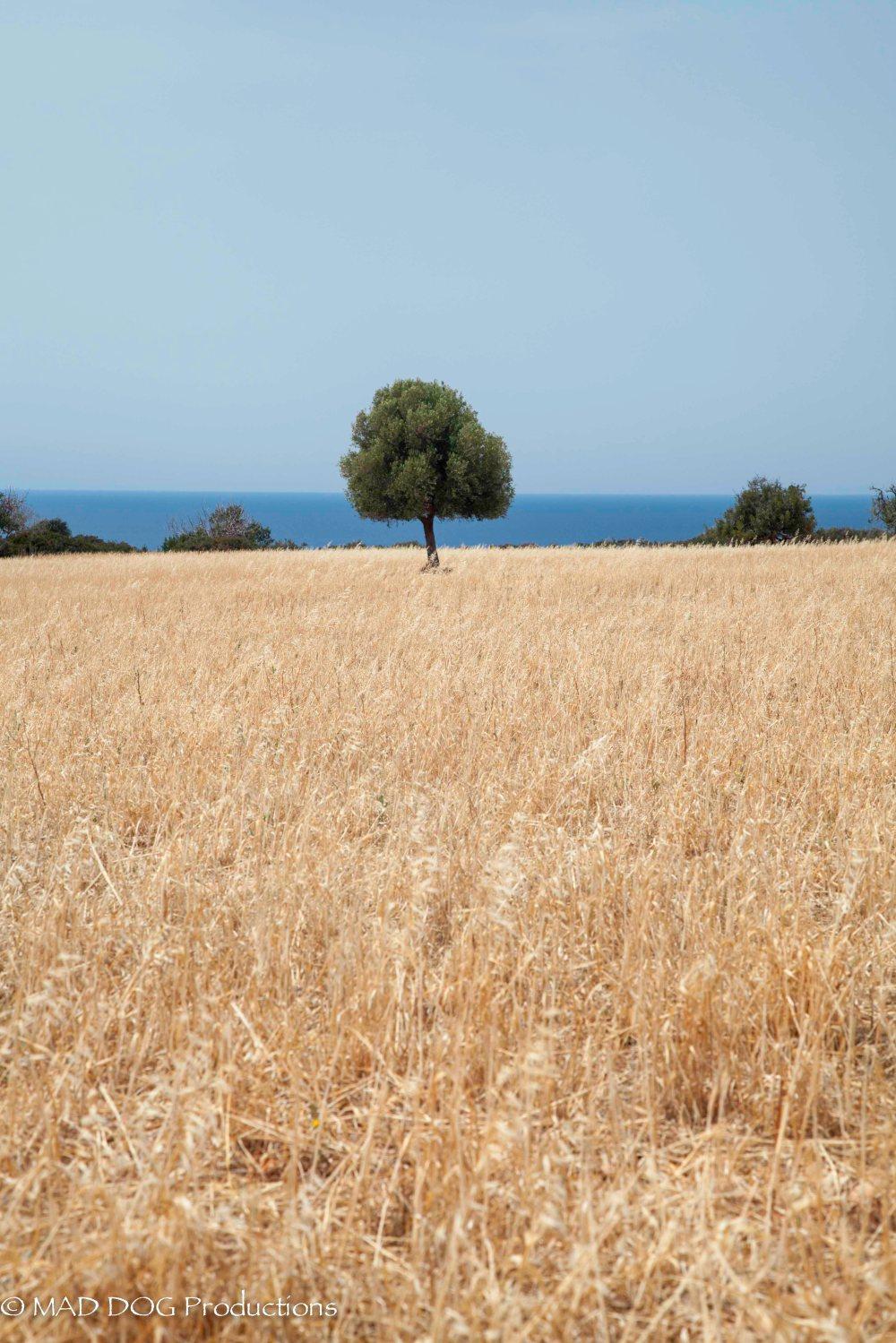Cyprus 1-3699