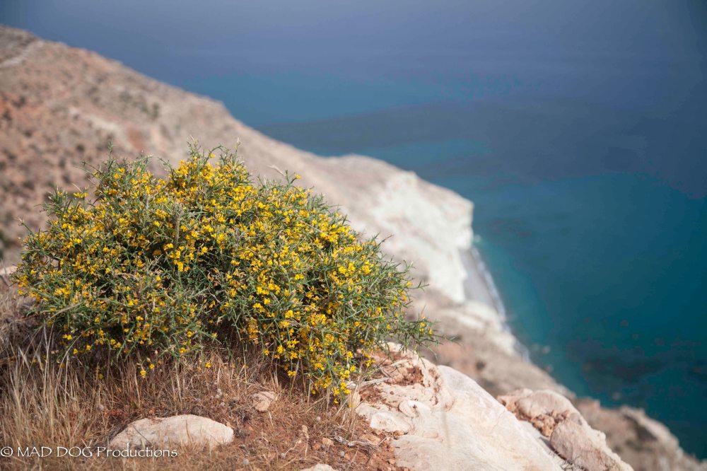Cyprus 1-3911