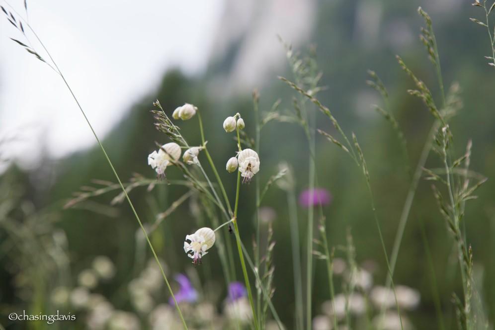 flowers-7343