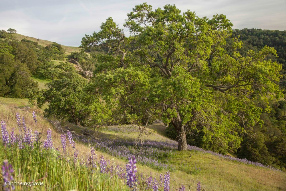 Spring at Henry W Coe State Park