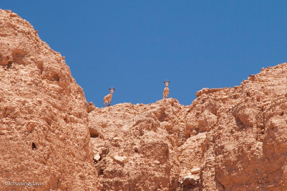 The Negev Desert, Curious Minds