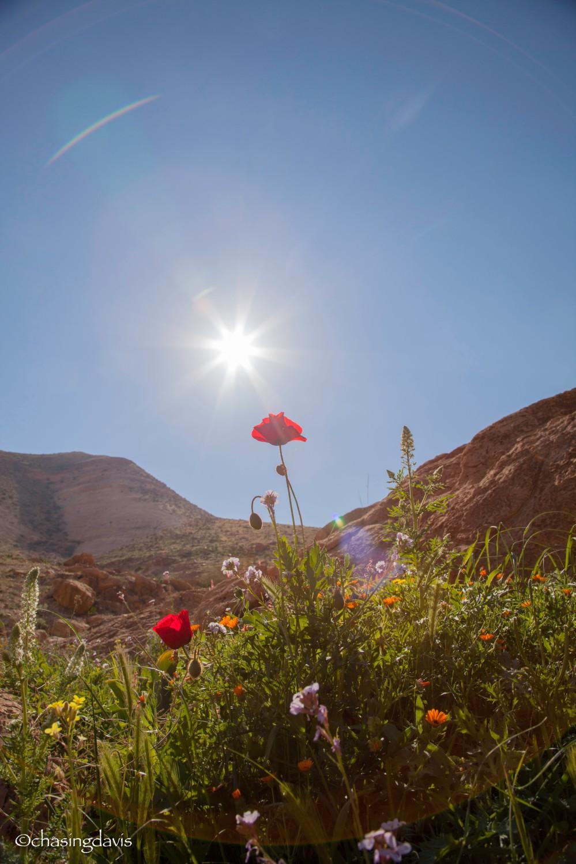 The Negev Desert, Spring in the Sun