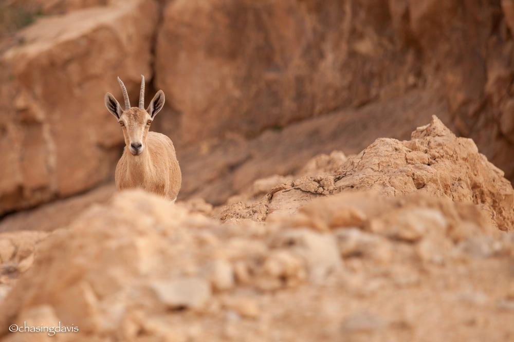 The Negev Desert, Peak-A-Boo